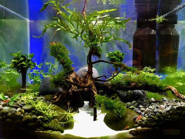 Aquaristik am park aquarien und fische for Aquarium fische im gartenteich